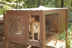 Bollinger Dog in Cage Small