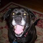 Raven, 2008 Bark in the Park Mascot Hopeful
