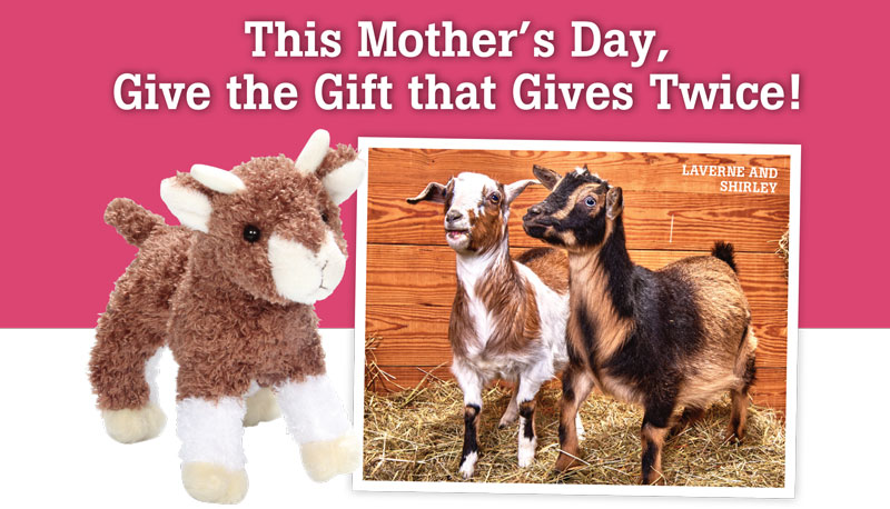 Give Mom a Unique Gift that Gives Back