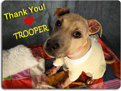 trooper-thank-you-email.png